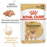 Влажный корм Royal Canin POMERANIAN (В ПАШТЕТЕ). Вид 2
