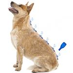 Капли Beaphar IMMO Shield Line-on от паразитов для собак мелких пород. Вид 2