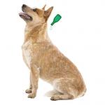 Капли Beaphar БИО VETO pure от блох, клещей и комаров для собак средних пород. Вид 2